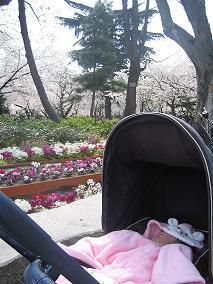 住吉公園の桜.JPG